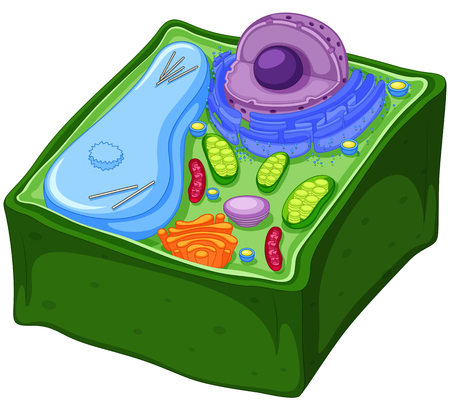 Plant cell in three dimensions illustration