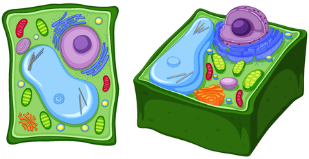 Close up diagram of plant cell illustration Vectores