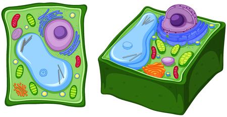 Close up diagram of plant cell illustration Stock Illustratie