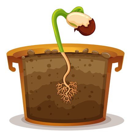 clay pot: Growing plant in clay pot illustration Illustration