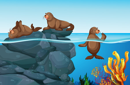 marine scene: Seals living in the sea illustration