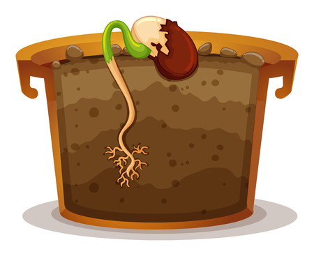 seed growing: Plant growing from small seed illustration