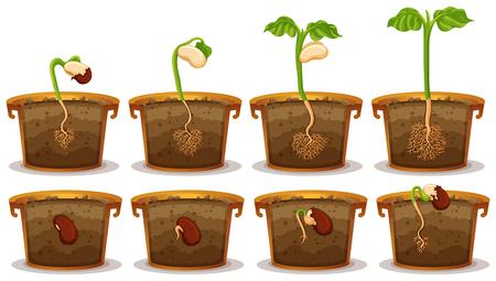 crecimiento planta: La germinación de semillas en la ilustración claypot