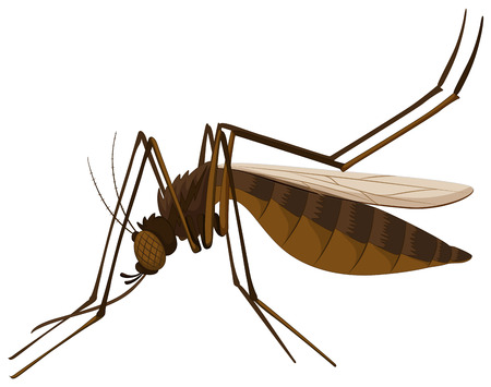 infectious disease: Brown mosquito on white background illustration