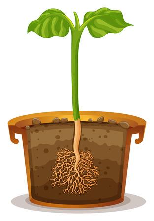 raices de plantas: La plantación de árboles en la ilustración olla de barro