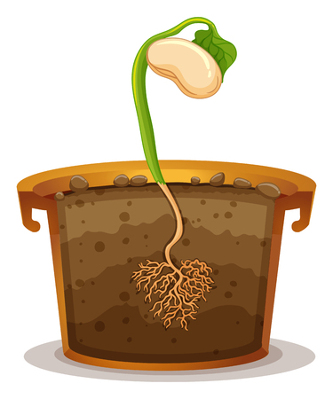 clay pot: Seed germination in clay pot illustration Illustration