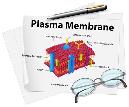 plasma: Paper showing plasma membrane drawing illustration