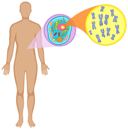 animal cell: Human body and animal cell illustration Illustration