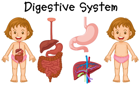 digestive system: Girl and digestive system diagram illustration