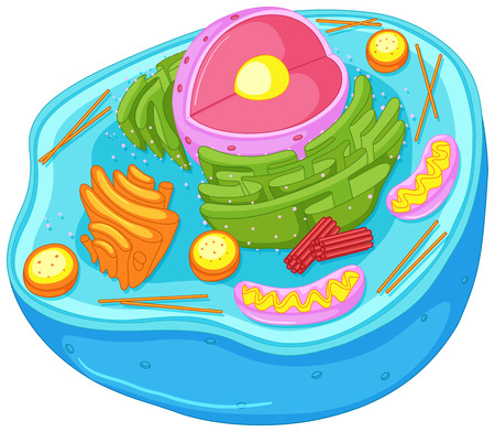 Close up diagram of animal cell illustration