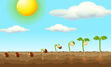 Growing plant from seed in the ground illustration