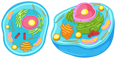 Animal cell in closer look illustration