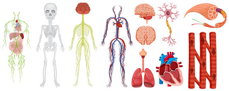 Different systems in human body illustration Illustration