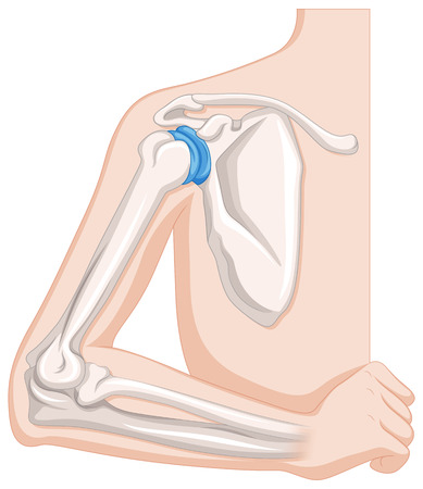 Diagram showing human elbow joints illustration
