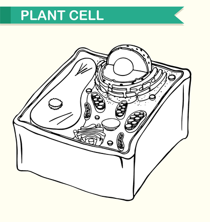 living things: Diagram showing plant cell illustration
