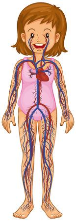 blood vessels: Little girl and blood vessels diagram illustration