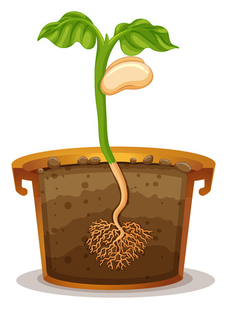 Seed germination in clay pot illustration Illustration