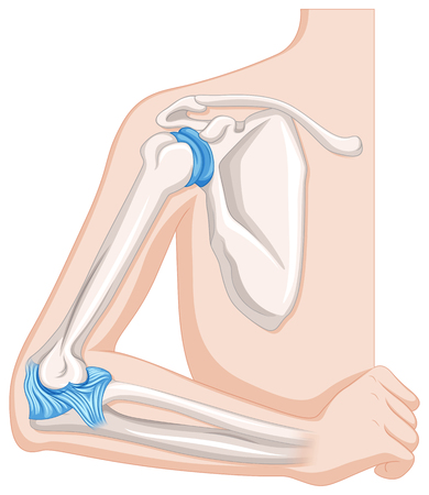 肘関節の図を示す図  イラスト・ベクター素材