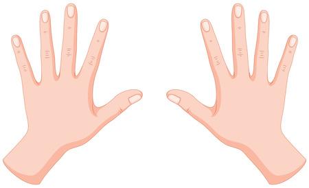 As mãos humanas esquerda e direita ilustração