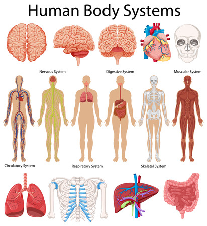 Diagram showing human body systems illustration Ilustração
