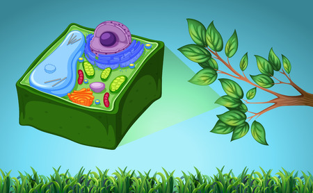 Plant cell and green leaf illustration