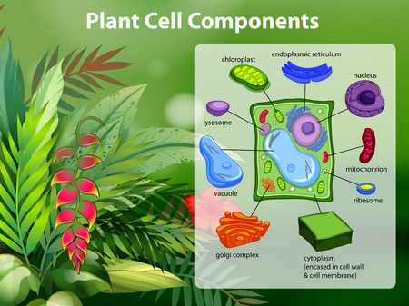 Plant cell components diagram illustration