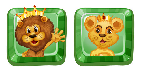 lioness: Lion and lioness on square badges illustration