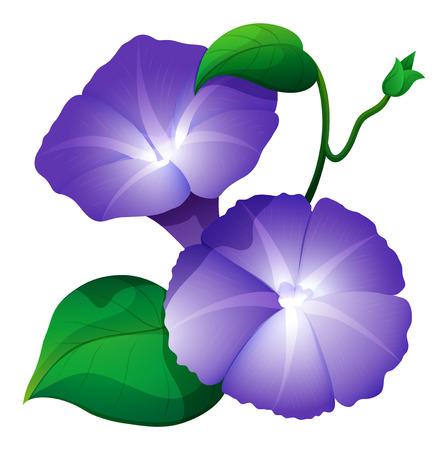 보라색 컬러 그림에서 나팔꽃
