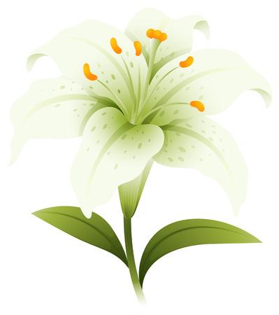 White lily flower on white background illustration Illustration