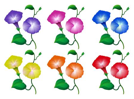 나팔꽃 꽃 일러스트의 다른 색상