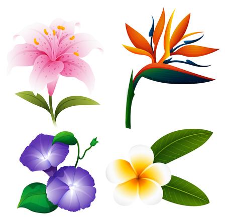 morning glory: Different kinds of flowers illustration Illustration