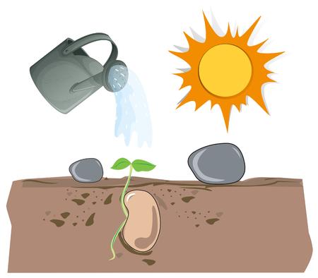 sunbeam background: Plant growing from underground illustration
