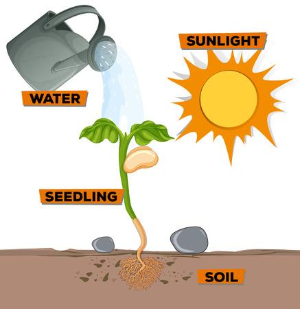 Diagramme montrant la croissance des plantes à partir de l'illustration de l'eau et de la lumière du soleil