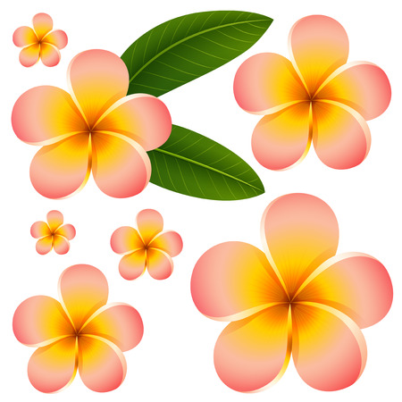 pink plumeria: Seamless background design with colorful flowers illustration