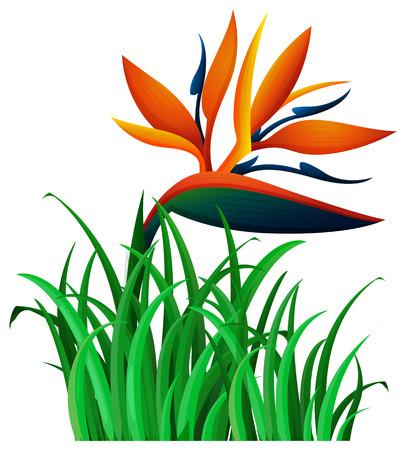 bird of paradise flower: Bird of paradise flower in the bush illustration