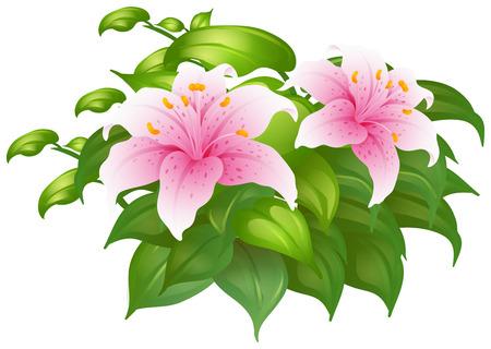 fleurs de lys roses en illustration brousse
