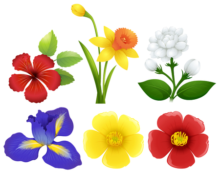 Different types of flowers illustration