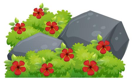 buisson: Fleurs d'hibiscus rouges dans l'illustration de brousse