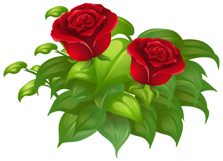 red leaves: Two red roses and green leaves illustration