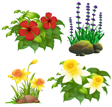 Different types of tropical flowers illustration