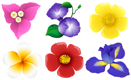 Different types of flowers on white illustration