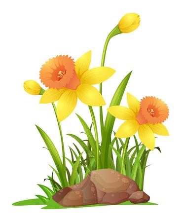 Daffodil flowers in garden illustration