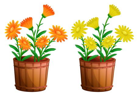 floral objects: Two pots of calendula flowers illustration Illustration