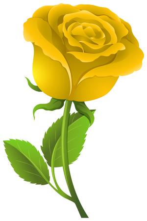 Yellow rose on green stem illustration