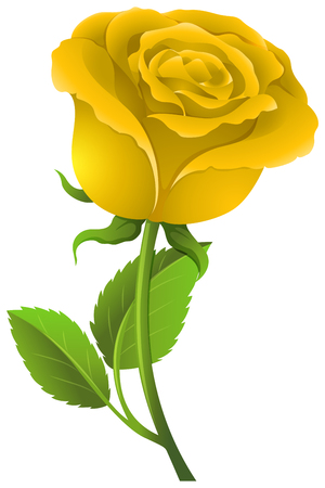 Yellow rose on green stem illustration