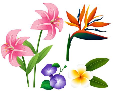 oiseau dessin: Différents types de fleurs illustration