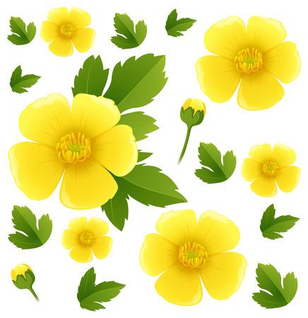 Fond transparent avec illustration de fleurs jaunes buttercup