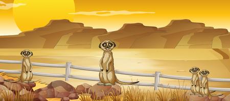 Meerkats staan in de woestijn illustratie