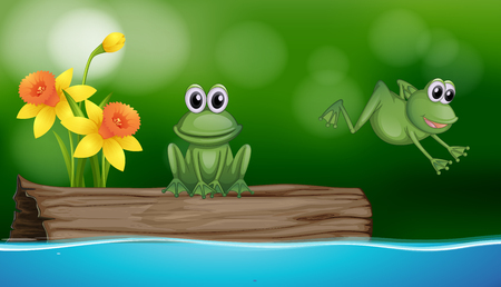 ponds: Two green frogs at the pond scene illustration Illustration