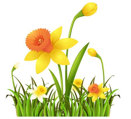 Yellow daffodil flowers in the bush illustration